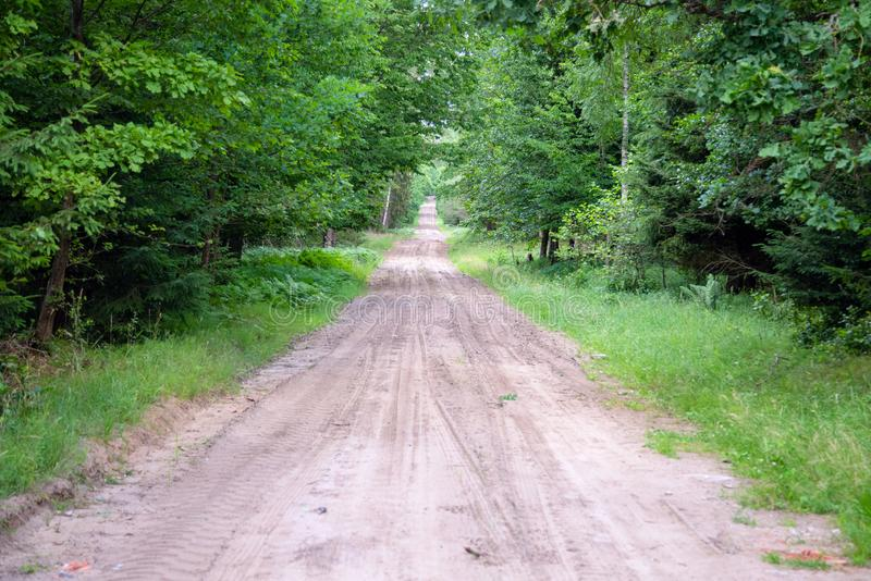 Gravel and sand road in the pine forest. Diminishing perspective of the path in the woods. Walking or driving through the trees on. The forrest road with green stock images