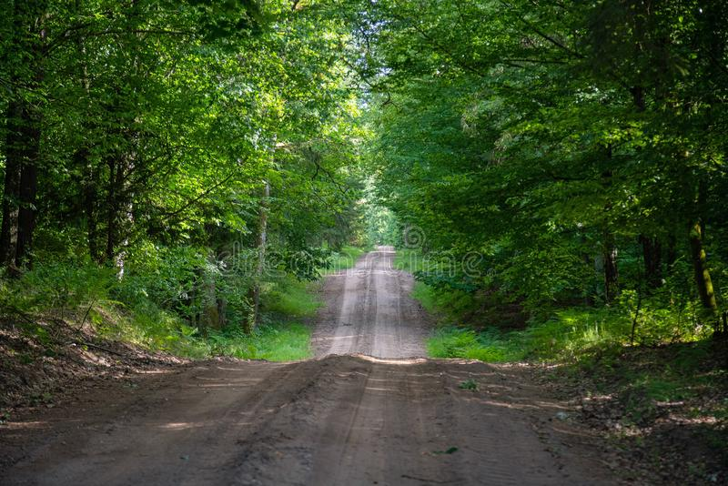 Gravel and sand road in the pine forest. Diminishing perspective of the path in the woods. Walking or driving through the trees on. The forrest road with green stock image
