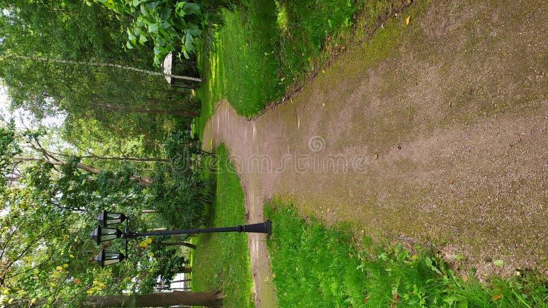 Gravelez le chemin dans le sentier de randonnée de forêt d'été ou la promenade vert de nature photos libres de droits
