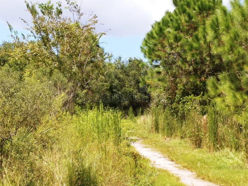 Gravelez le chemin de marche entouré par des arbres sous un ciel bleu ensoleillé image libre de droits
