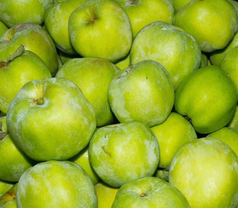 Gravenstein Apples On Display Stock Photography