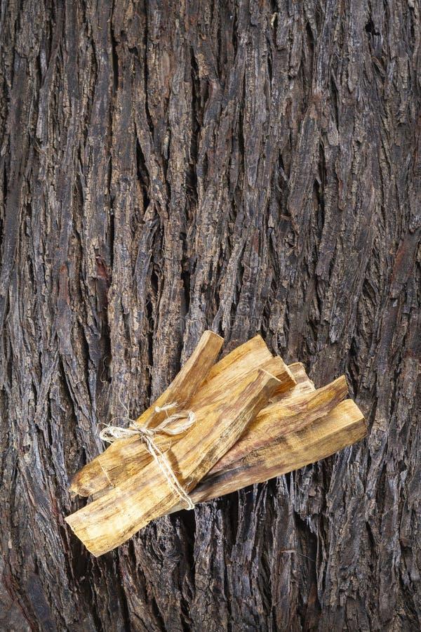 Graveolens, esencia y resina del Bursera en ( español; ' palo santo' ) es un árbol salvaje en América latina foto de archivo