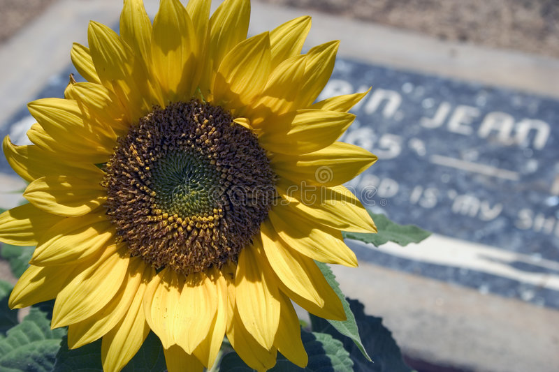 Download Graveside Flower stock photo. Image of yellow, headstone - 12402