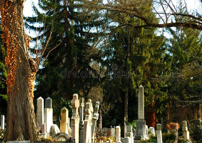 Gravestone in the pine`s shadow. stock photography