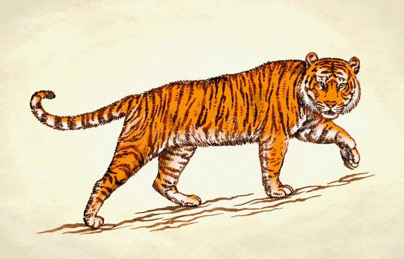 Gravez l'illustration de tigre d'aspiration d'encre illustration stock