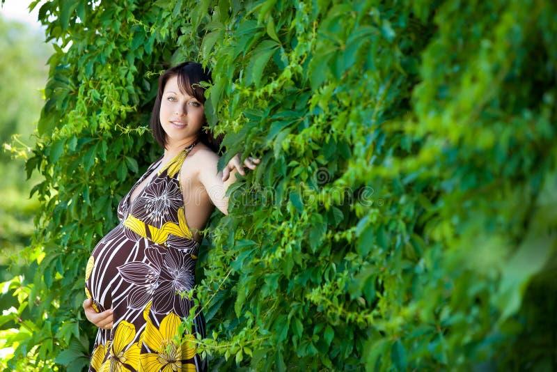 Gravid caucasian kvinna royaltyfri bild