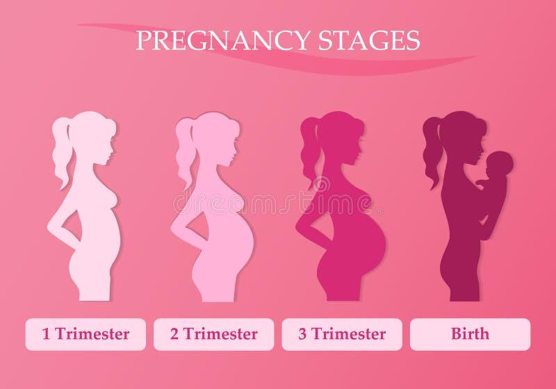 Gravid kvinna - först, andra och tredje kvartal royaltyfri illustrationer
