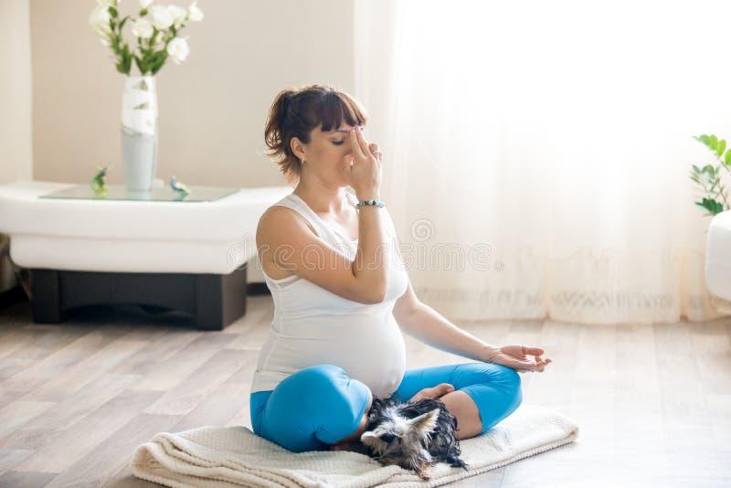 Gravid kvinna och hennes älsklings- hund som kopplar av med hemmastadd yoga arkivbilder