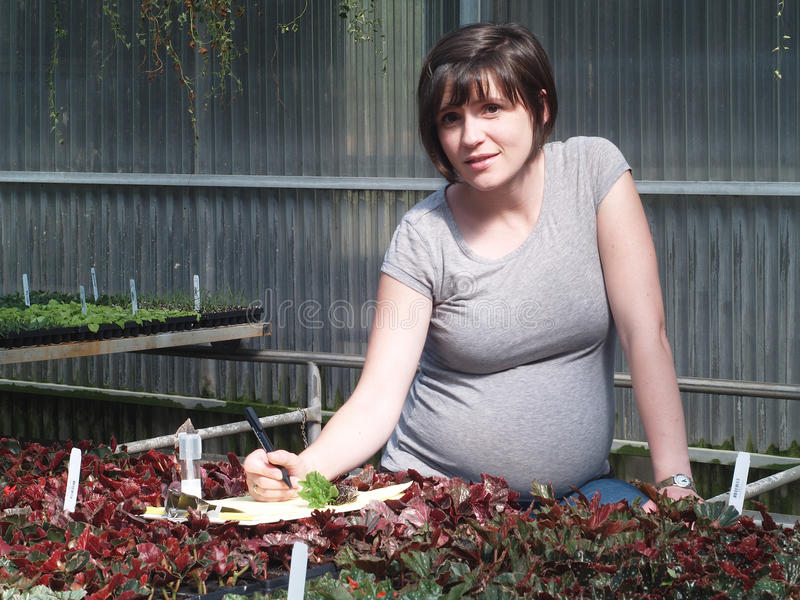 gravid kvinnaworking royaltyfri fotografi