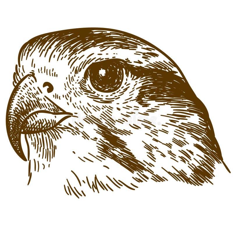 Gravieren der zeichnenden Illustration des Falkekopfes lizenzfreie abbildung