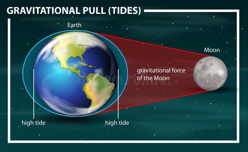 Gravitational pull tides diagram. Illustration royalty free illustration