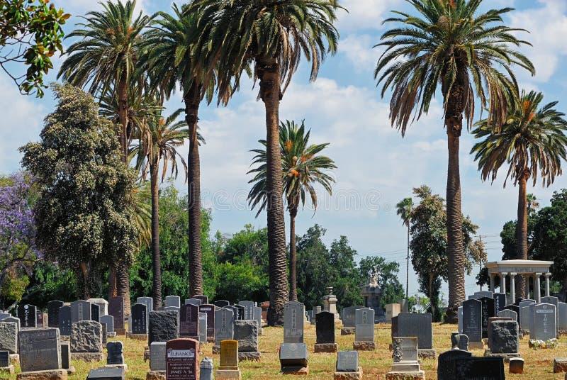 Gravstenar och palmträd i den vintergröna kyrkogården av Los Angeles royaltyfria bilder