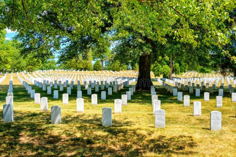 Gravstenar under ett träd på Arlington den nationella kyrkogården fotografering för bildbyråer