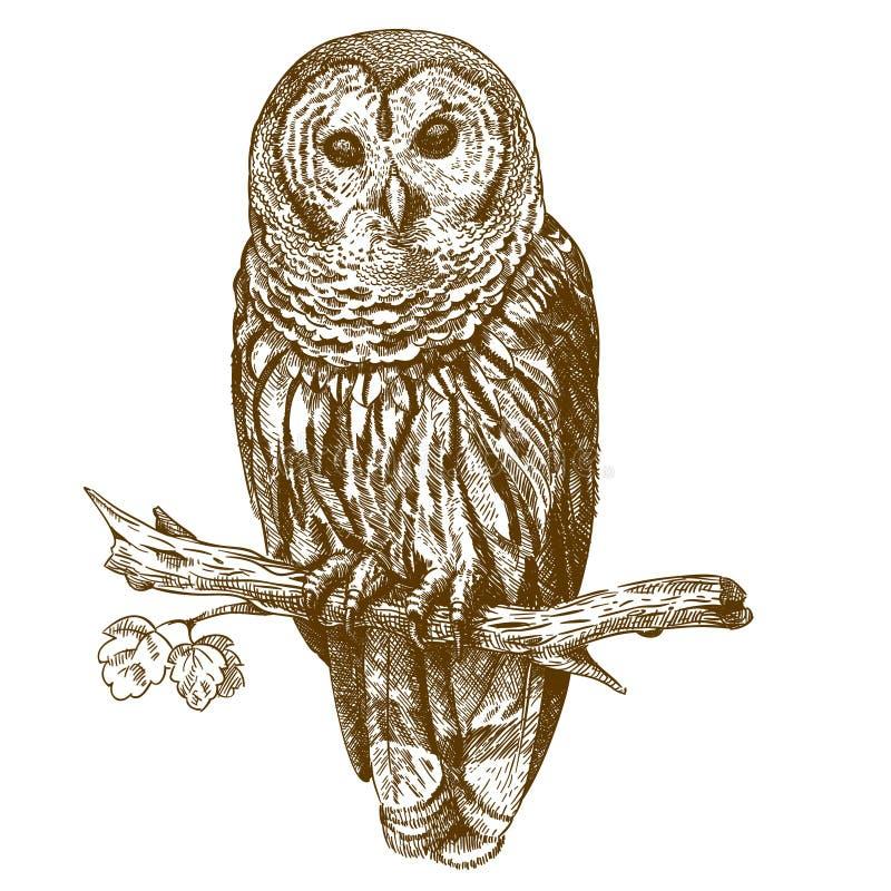 Gravure antieke illustratie van uil vector illustratie