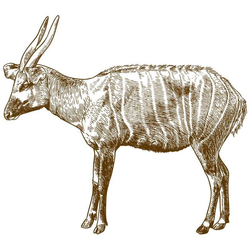 Gravure de l'illustration de dessin de l'antilope de bongo illustration libre de droits