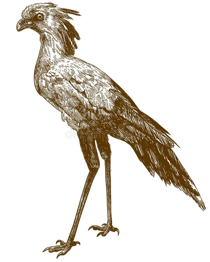 Gravure de l'illustration de dessin de l'oiseau de secrétaire illustration libre de droits