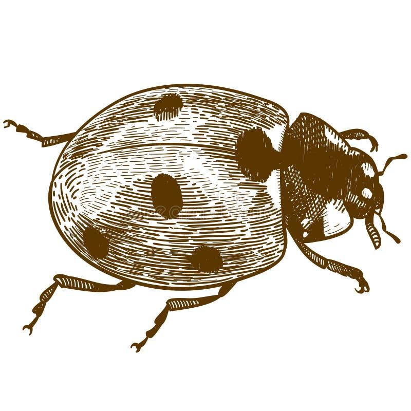 Gravure de l'illustration de la coccinelle ou de la coccinelle illustration stock