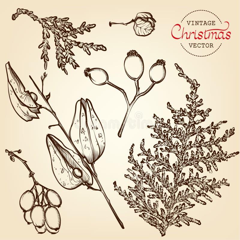 Gravure de vecteur d'herbes de Noël de vintage photo libre de droits