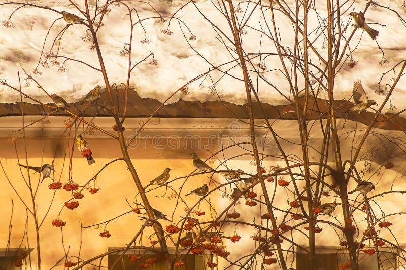 Gravure japonaise dans le juste de matin hors de ma fenêtre photo libre de droits