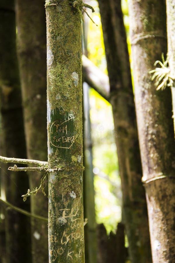 Gravure op een bamboeboom in Puerto Rico stock foto's