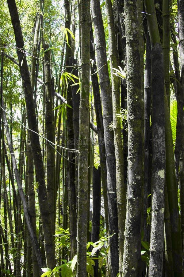 Gravure op een bamboeboom in Puerto Rico stock afbeeldingen