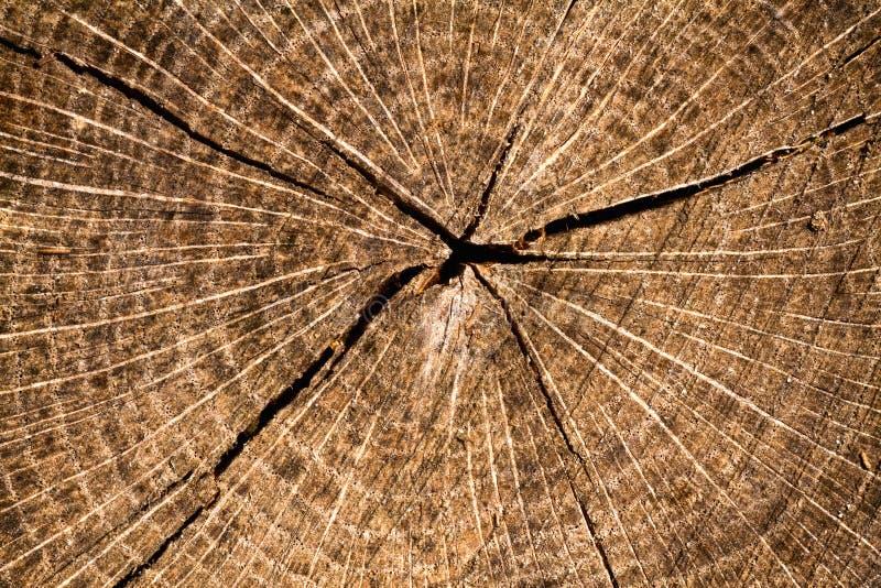 Gravure sur bois photographie stock libre de droits