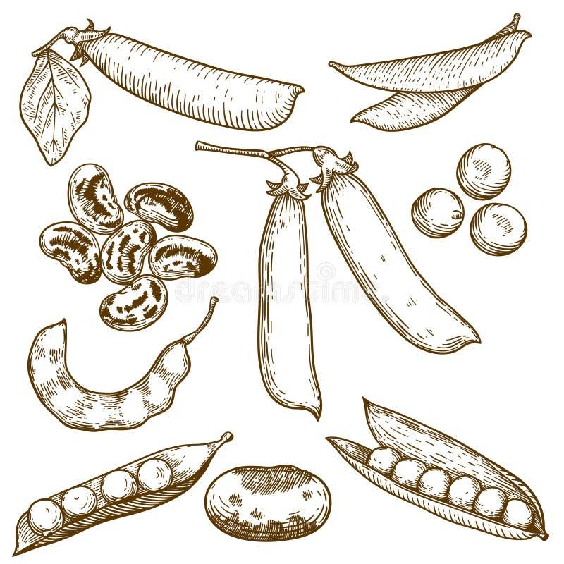 Gravureillustratie van bonen en erwten vector illustratie