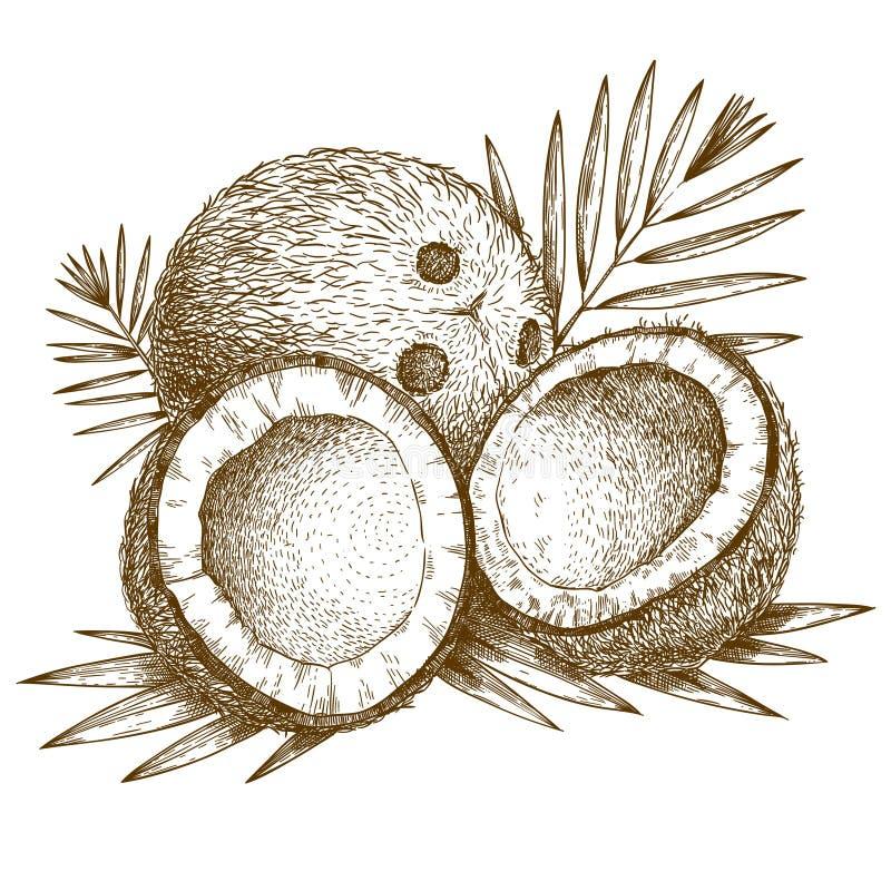 Gravureillustratie van kokosnoot en palmblad vector illustratie