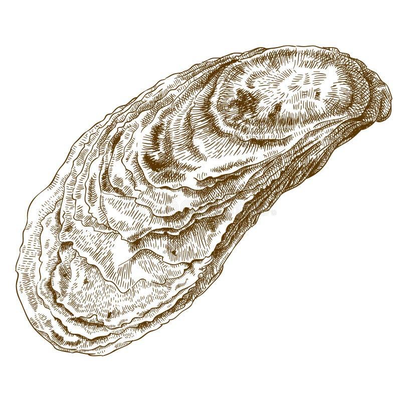 Gravureillustratie van oestershell vector illustratie