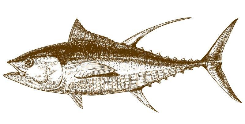 Gravureillustratie van tonijn royalty-vrije illustratie