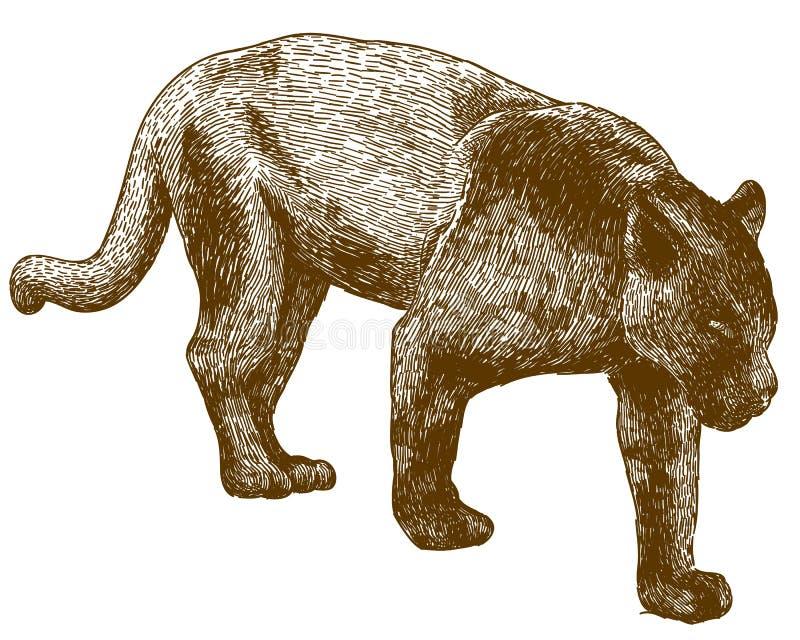 Gravureillustratie van zwarte panter vector illustratie
