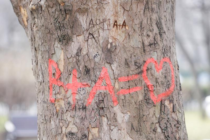Gravures op een tree'sschors royalty-vrije stock foto