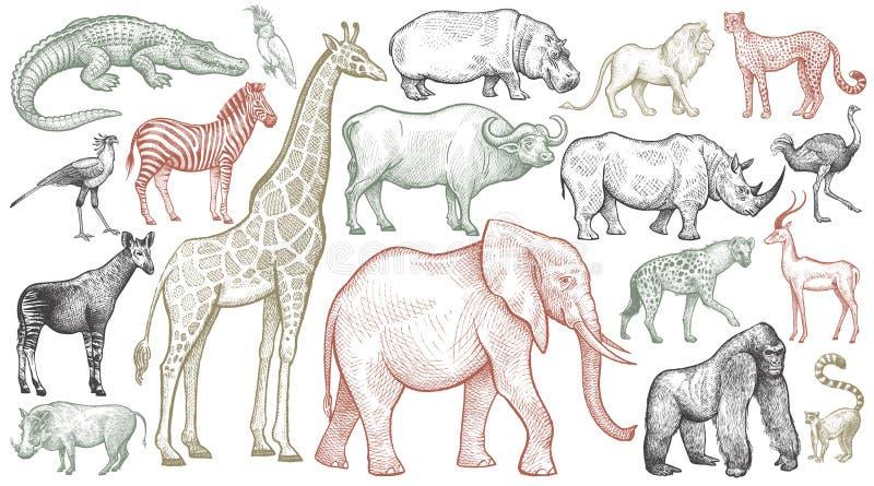 Gravyr av afrikanska djur arkivbild
