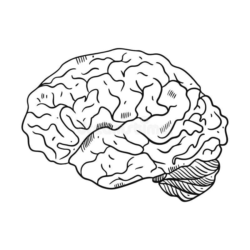 Gravyrhj?rnillustration Hand tecknad vektorillustration royaltyfri illustrationer