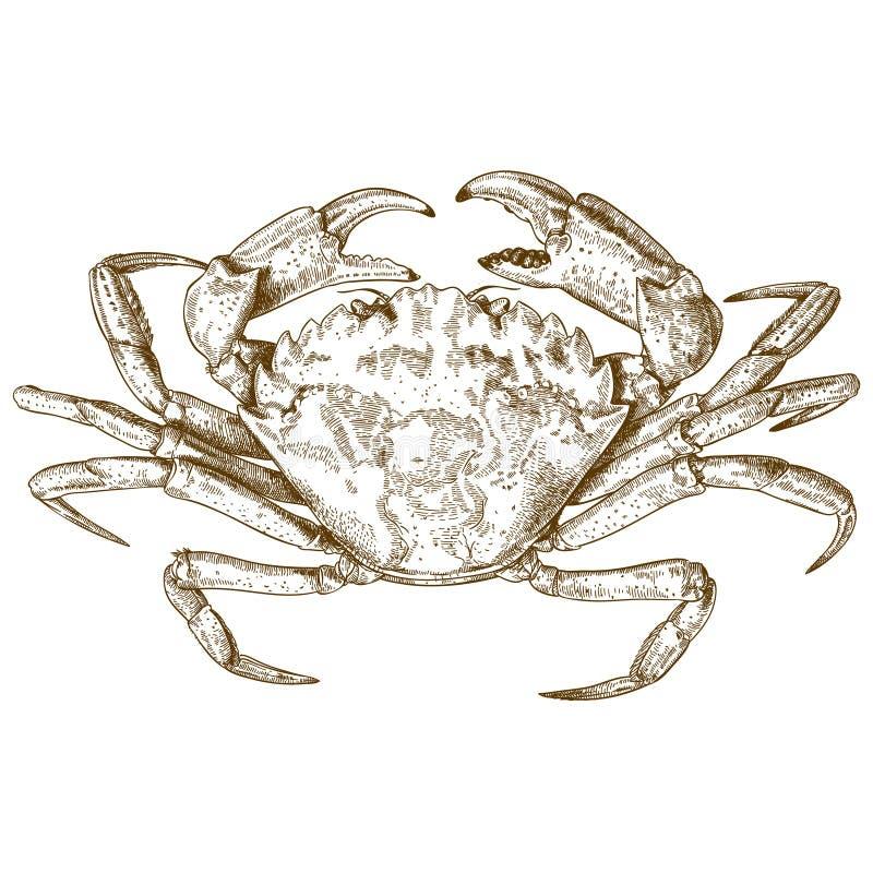 Gravyrillustration av krabban stock illustrationer