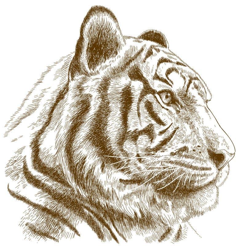 Gravyrillustration av tigerhuvudet stock illustrationer