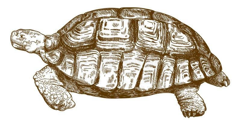 Gravyrteckningsillustration av den stora sköldpaddan vektor illustrationer