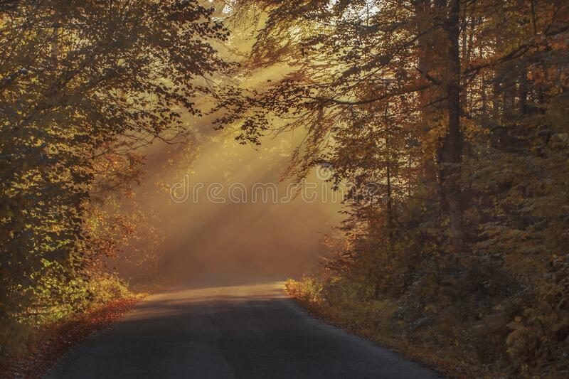 Gray Asphalt Road in Between Brown Orange Leaf Trees during Daytime stock image