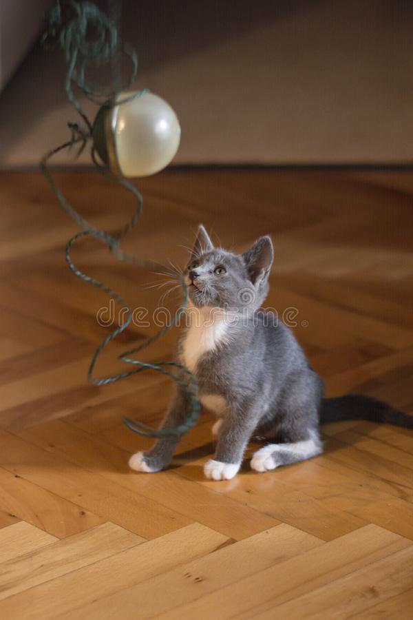 Gray baby cat playing with ball stock photography