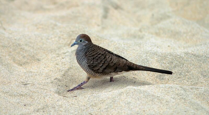 Gray And Black Bird On White Sand During Daytime Free Public Domain Cc0 Image