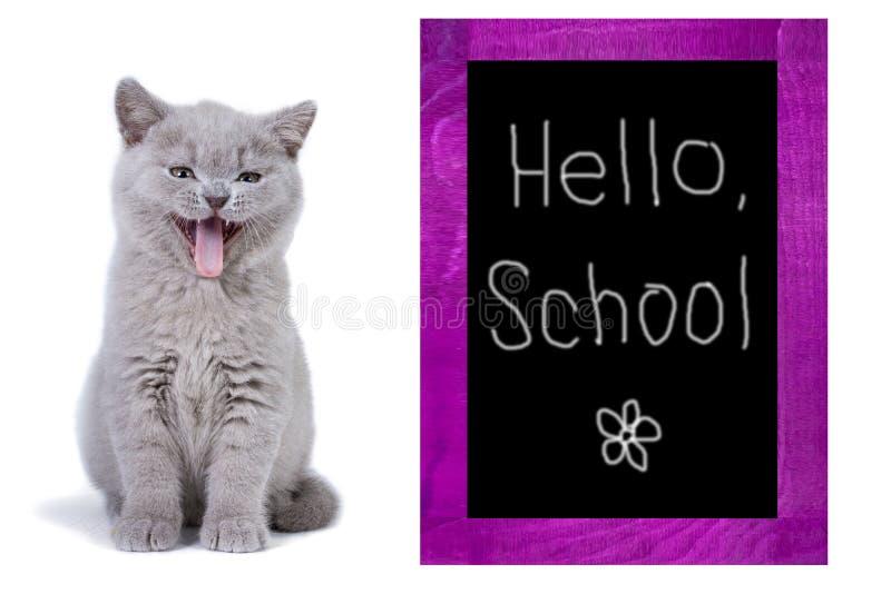 Gray British-katje het glimlachen Zit dichtbij de schoolraad Witte achtergrond De School van inschrijvingshello royalty-vrije stock afbeelding