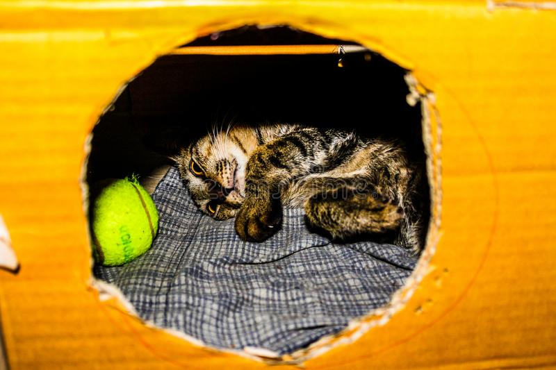 Gray and Brown Kitten in Cardboard Box stock images