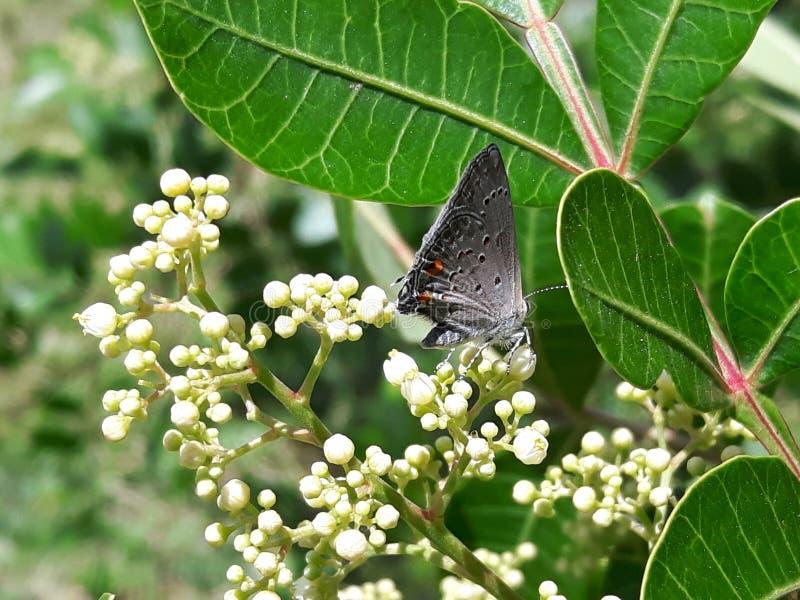¡Gray Butterfly! foto de archivo