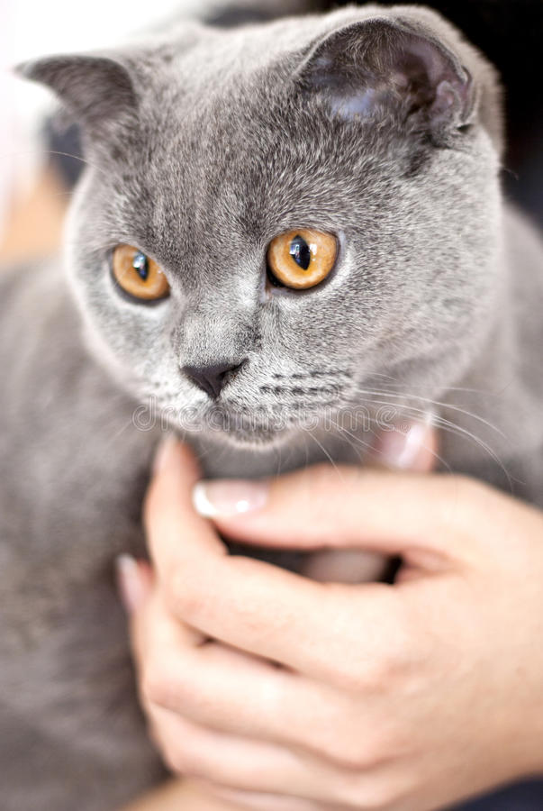 Download Gray cat stock photo. Image of pretty, looking, gray - 20765362