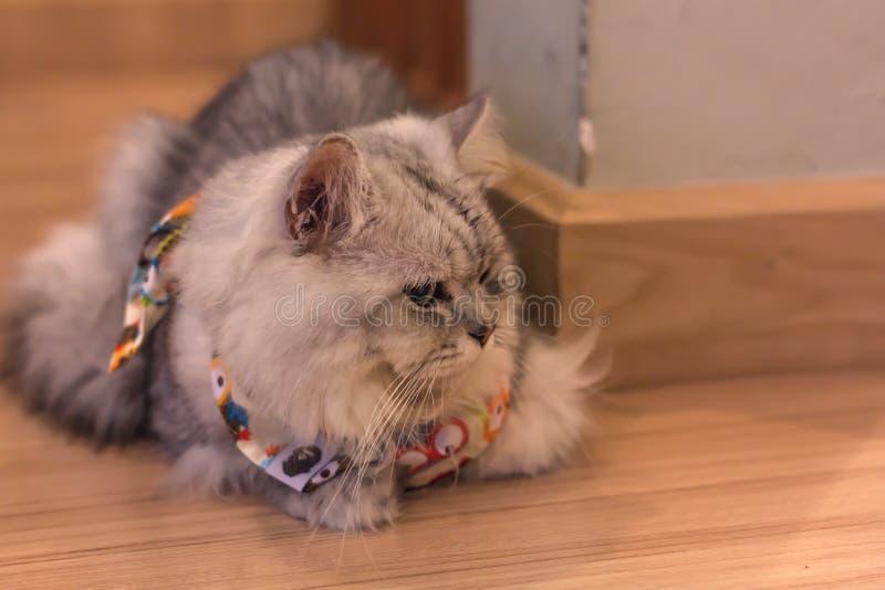 Gray Cat royalty-vrije stock afbeelding