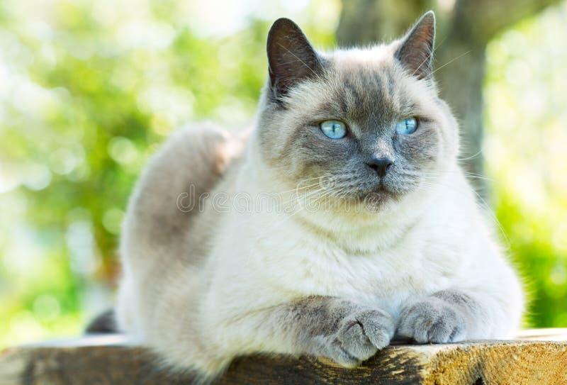 Gray Cat stockbilder