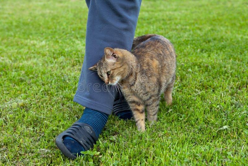 Gray Cat imagen de archivo