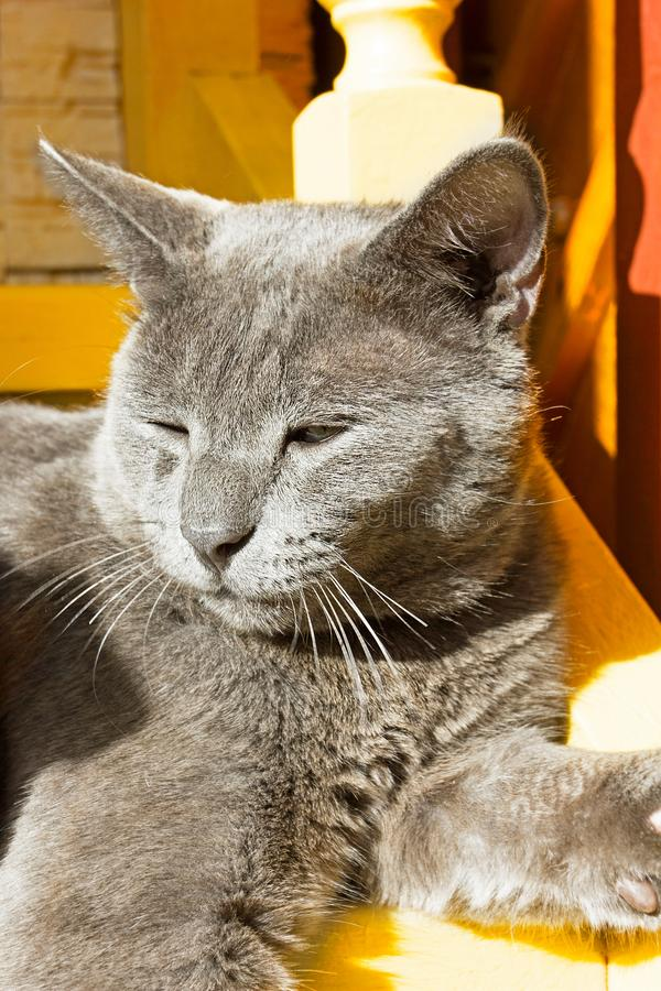 Gray cat basking in the sun on  stairs royalty free stock images