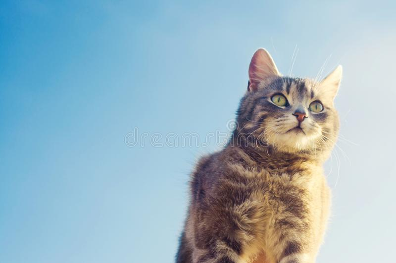 Gray cat on a blue background in sunlight. cat in the sky. a pet. beautiful kitten. place for text stock photo