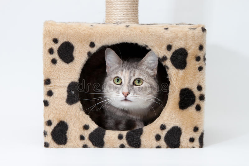 Download Gray Cat In Cats House Isolated Stock Photos - Image: 20485483
